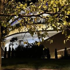 Foto 11 de 31 de la galería iphone-12-pro-max-fotos-en-baja-luminosidad en Applesfera