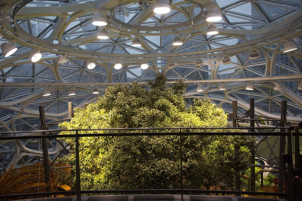 The Spheres Amazon 12