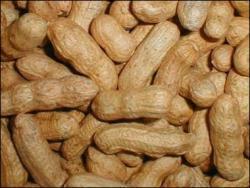 El consumo de frutos secos en el embarazo relacionado con el asma infantil
