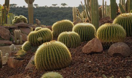 Planes de verano en la ciudad: Desert city, el nuevo jardín de cactus de Madrid