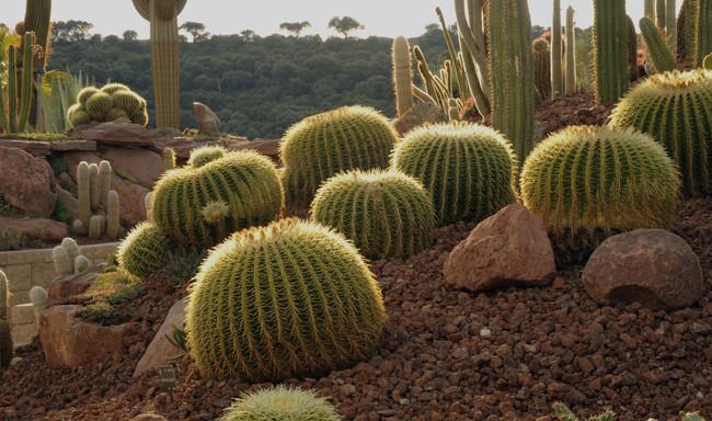 Desert City El Jardin De Cactus De Madrid