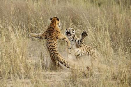 Archna Singh Nature Mencion
