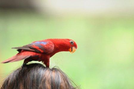 Aves de compañía