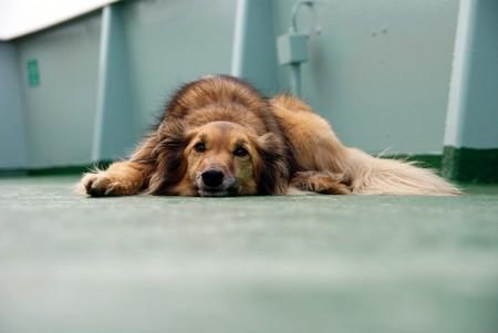 Cómo de preocupado deberías estar porque tu perro contraiga el coronavirus
