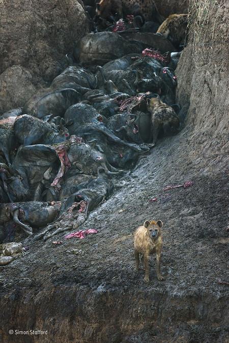 Simon Stafford Wildlife Photographer Of The Year Mammals