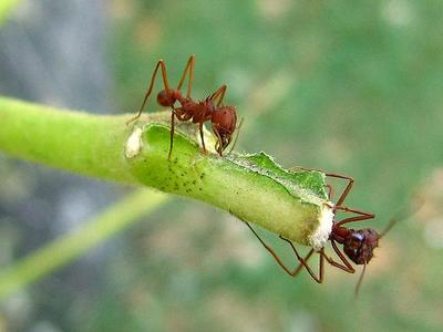 Fijándonos en las colonias de hormigas para resolver problemas de organización humanos