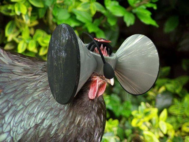 Creando un Matrix para pollos
