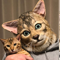 Ya puedes tener una máscara de tu mascota a escala humana. Gracias a Japón, evidentemente