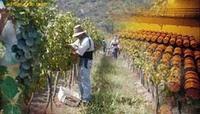 Turisvino, una web sobre el turismo del vino en Chile