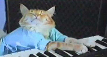 Google crea un avanzadísimo cerebro artificial y éste decide buscar gatos en Internet
