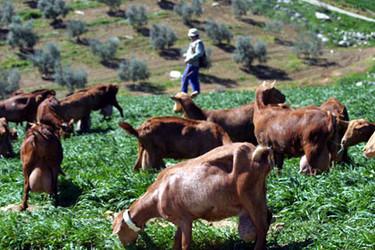 Carne y leche de cabra con antioxidantes naturales