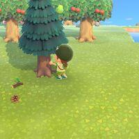 Animal Crossing: New Horizons: cómo conseguir bellotas y piñas