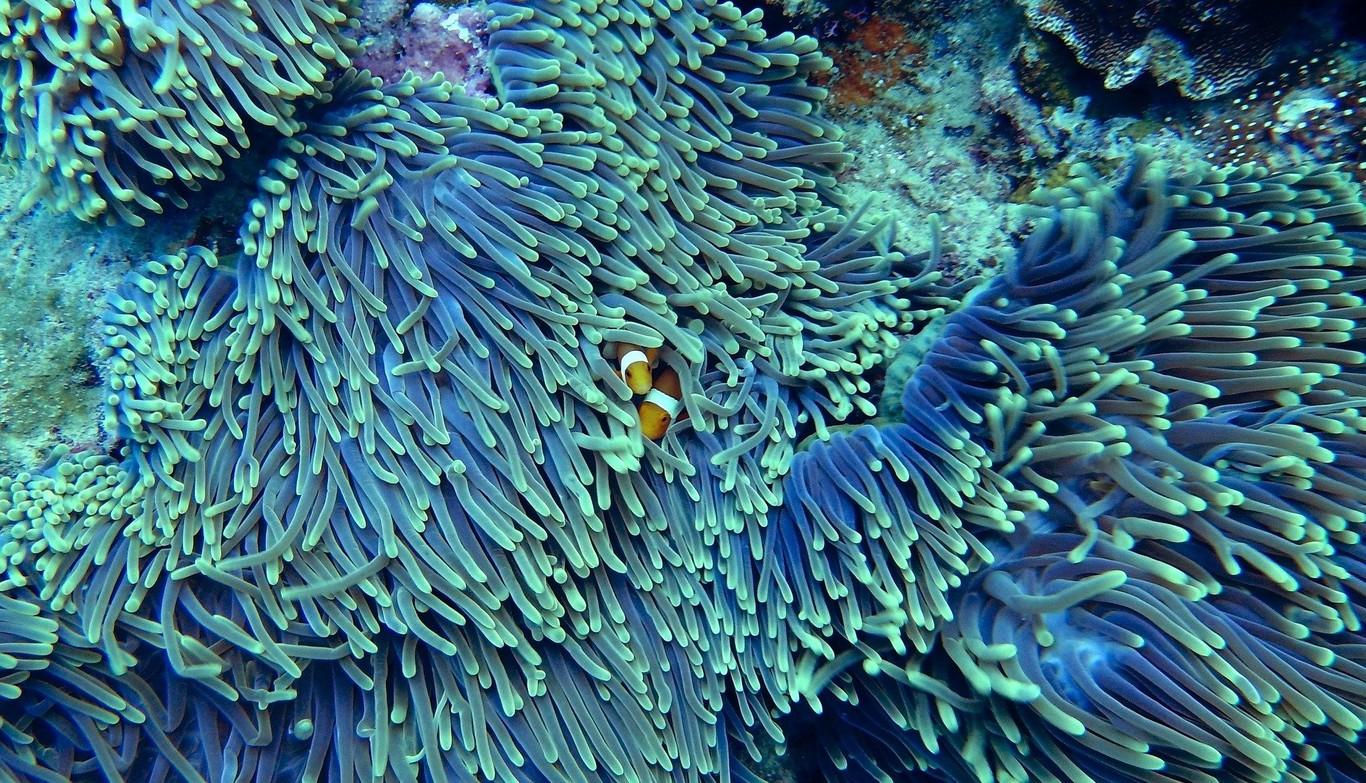 Así es la curiosa combinación de inteligencia artificial, Raspberry Pi y otros dispositivos para monitorizar corales a tiempo real