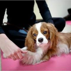 Foto 5 de 5 de la galería yoga-con-tu-mascota en Trendencias