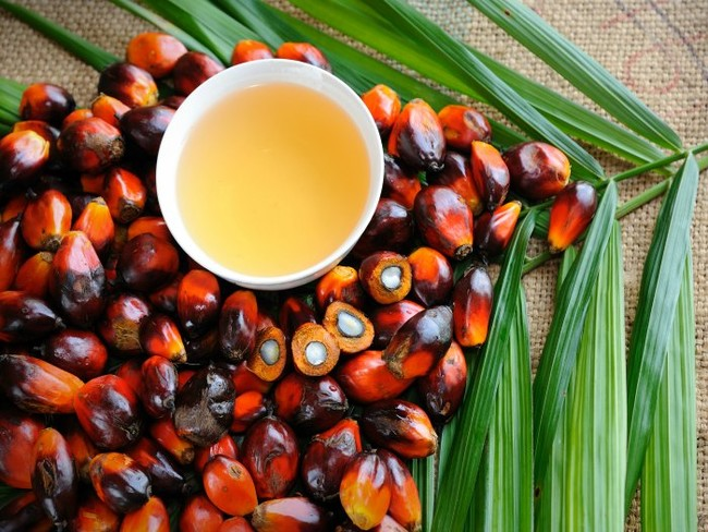Fruto Aceite Palma