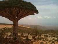 Viajes exóticos: Isla de Socotra