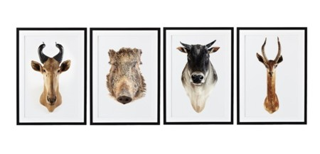 cabezas animal 2