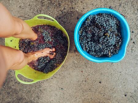 pisado de uvas vino moderno