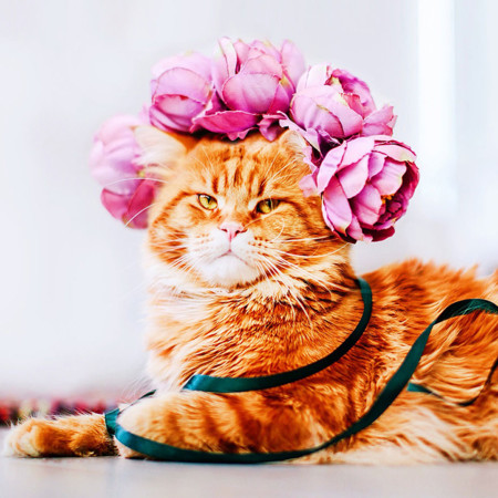 Ginger Cat Photography Kotleta Cutlet Kristina Makeeva Hobopeeba 14