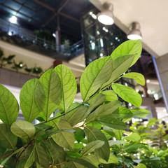 Foto 24 de 29 de la galería oneplus-5t-fotografias en Xataka