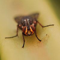 Nikon tanken Camera: un prototipo para divertirse buscando insectos entre la tierra y los árboles