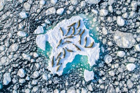 Estas son las mejores imágenes de naturaleza del año según el nuevo concurso Nature TTL Photographer of the Year 2020
