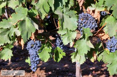 Fiestas del vino en Valdepeñas