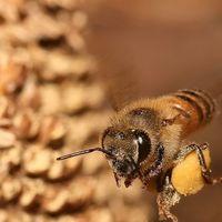 El 75% de la miel contiene pesticidas ligados al declive de las abejas