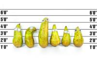 Edible Eyes On Pears