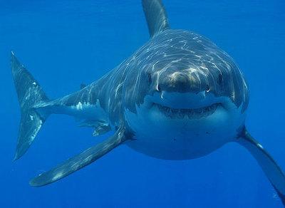 Los mejores acuarios del mundo: la ruta del tiburón (III)