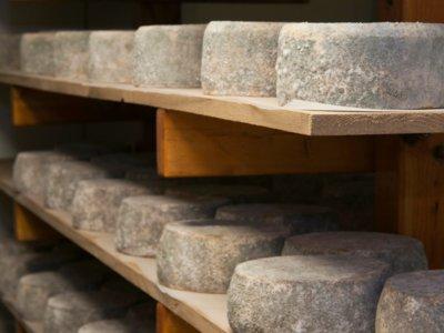 Descubre algunos de los 15 quesos más caros del mundo