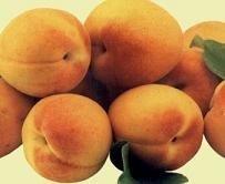El albaricoque y siete especias tienen mayor capacidad antioxidante