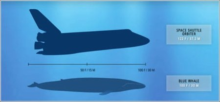 La diferencia entre la criatura más pequeña del mundo y la más grande del mundo