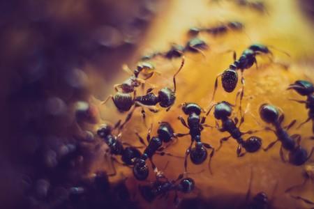 """El misterio de las hormigas soldado: así es cómo un órgano """"inútil"""" ha resuelto uno de los misterios que más intrigaban a Darwin"""