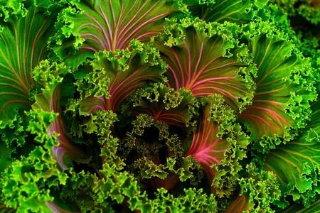 Plant 690051 1920 1