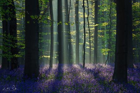 Martin Podt Forest 7