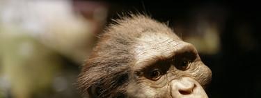 41 años con Lucy la australopithecus: el fósil más famoso del mundo