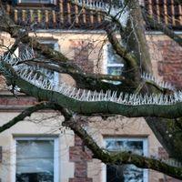 Alguien cree que para proteger los coches lujosos de los excrementos es necesario que las aves no usen los árboles