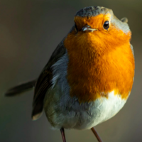 """Este pájaro tiene una brújula en los ojos: descubren los efectos cuánticos que permiten a las aves migratorias """"ver"""" los campos magnéticos de la Tierra"""