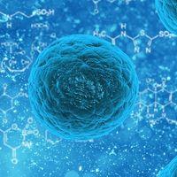 Investigadores curan infecciones resistentes a los medicamentos sin antibióticos
