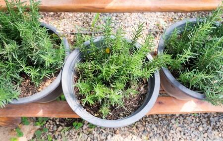 Plantas para convertir el balcón en un vergel