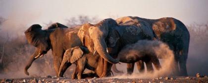 Los 10 mejores destinos para ver vida salvaje en Africa (VII)