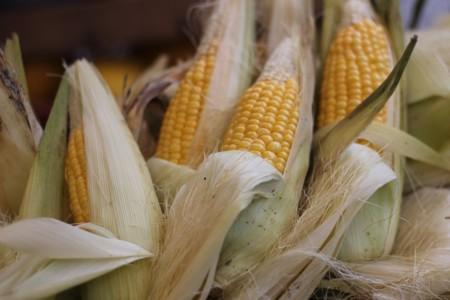 Corn 732068 1280