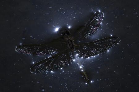 C Joan Marques Faner Constelacion Libelula Cupoty