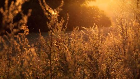 Ya está aquí la primavera y sus alergias: por qué se intensifican en esta época y qué pueden esperar los alérgicos este año