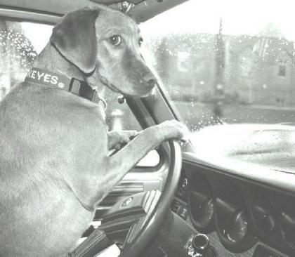 Animales gato perro conduciendo
