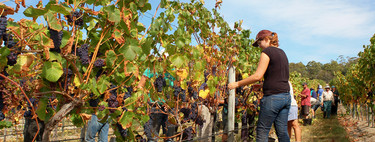 Pagar 200 euros por recoger uvas y otros 11 hitos del ser humano en la era del tardocapitalismo