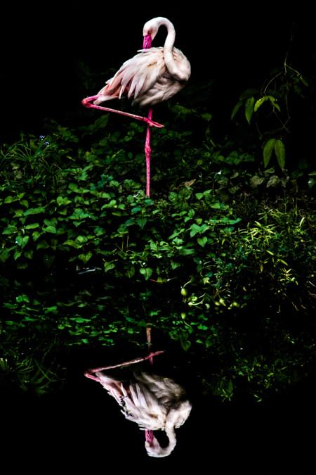 131020828264054754 C Wang Tai Ran Steiner Wang Winner Taiwan National Award 2016 Sony World Photography Awards