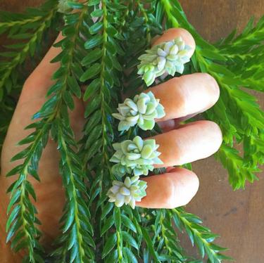 Parece 3D, pero las manicuras más increíbles que hemos visto se hacen con plantas auténticas