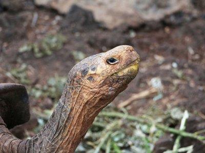 Diego, la tortuga padre de otras 800 tortugas que ha salvado a su especie de la extinción